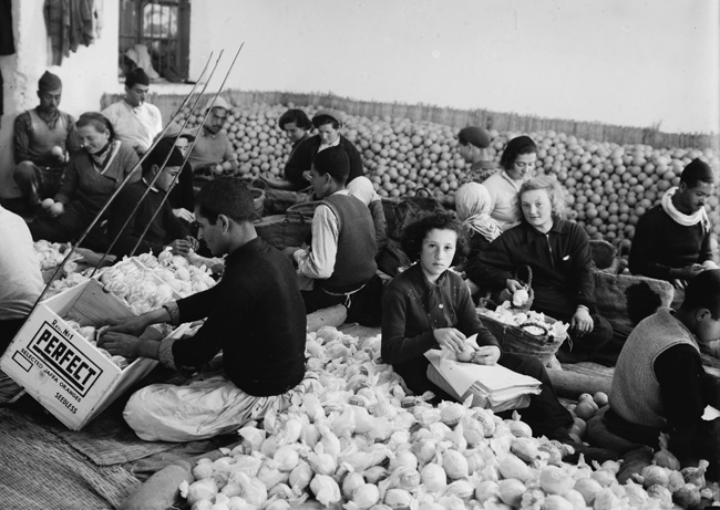 Sorting oranges in Rehovot