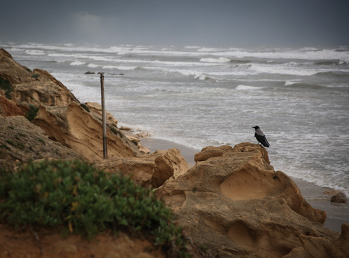 A stormy winter day in Israel. (Photo by Hadas Parush/Flash90.)
