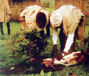Image shows two men preparing to slaughter a goat.
