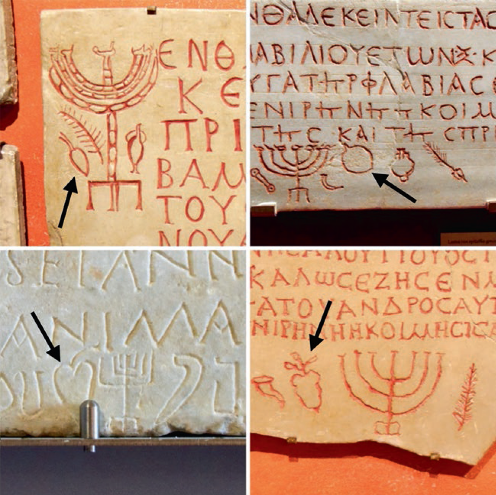 Four ancient tombstones with pictures of lulav and etrog.
